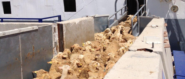Noatum Codemar Terminal Tarragona cargas de ganado
